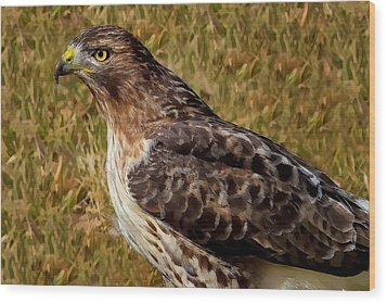 Red Tailed Hawk Close Up Wood Print by John Absher