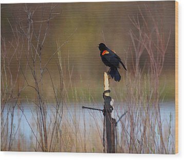 Red Winged Blackbird 2 Wood Print by Ernie Echols