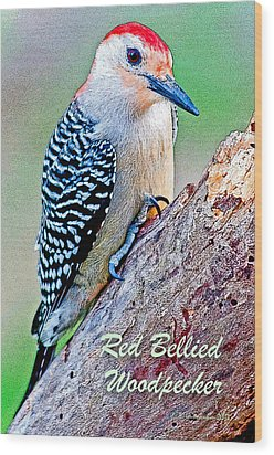 Wood Print featuring the photograph Redbellied Woodpecker Poster Image by A Gurmankin
