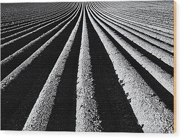 Ridge And Furrow Wood Print by Tim Gainey