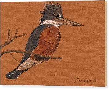 Ringed Kingfisher Bird Wood Print by Juan  Bosco