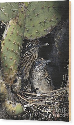 Roadrunners In Nest Wood Print by Anthony Mercieca