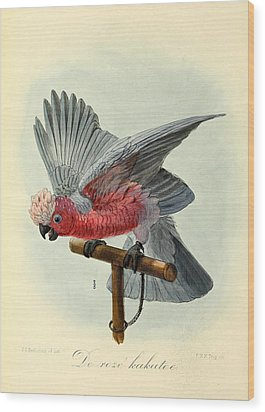 Rose Cockatoo Wood Print by J G Keulemans
