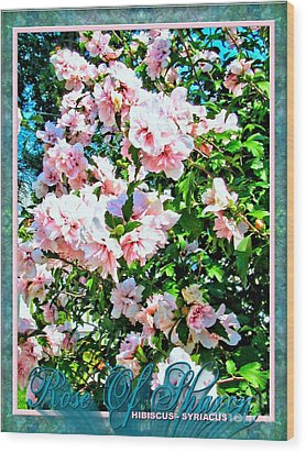 Rose Of Sharon -hibiscus Syriacus Wood Print by Margaret Newcomb