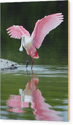 Roseate Spoonbill Wood Print by Clint Buhler