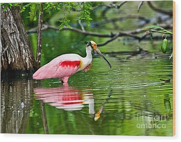Roseate Spoonbill Wading Wood Print by Anthony Mercieca