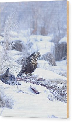 Rough Legged Hawk On Deer Carcass Wood Print by Gregory K Scott