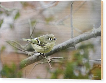 Ruby-crowned Kinglet Wood Print by Christina Rollo