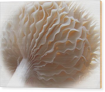 Ruffled And Pretty Or Is It  Pretty Ruffled ?  Wood Print by Tina M Wenger