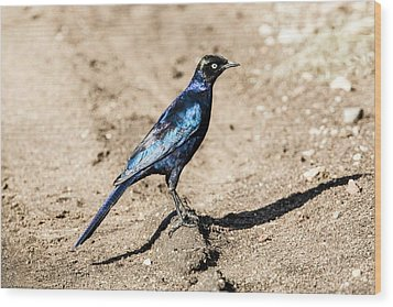 Ruppell's Glossy-starling Wood Print by Photostock-israel