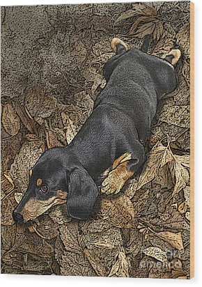 Sad Murphy Wood Print by Judy Wood
