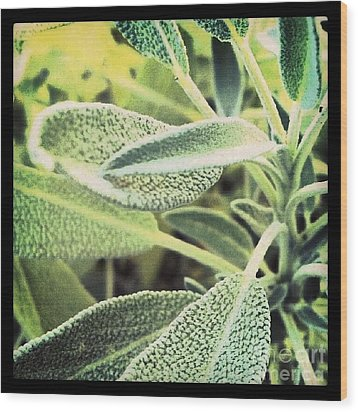 Sage Wood Print by Christy Bruna