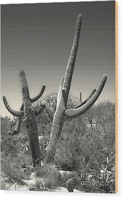 Saguaro Cactus In Duotone Wood Print by Gregory Dyer