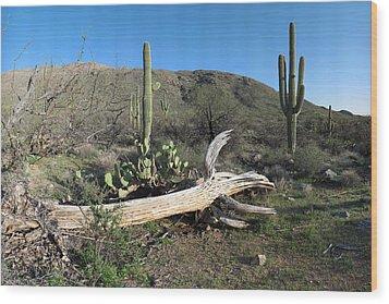 Saguaro Skeleton Saguaro National Park Az  Wood Print by Brian Lockett