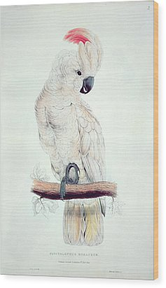 Salmon Crested Cockatoo Wood Print by Edward Lear