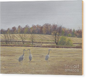 Sandhill Cranes Feeding In Field  Wood Print by Jymme Golden