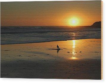 Sandpiper At Natural Bridges Santa Cruz Wood Print by Garnett  Jaeger