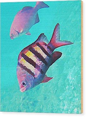 Sargeant Fish Wood Print by John Malone