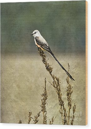Scissortailed-flycatcher Wood Print by Betty LaRue