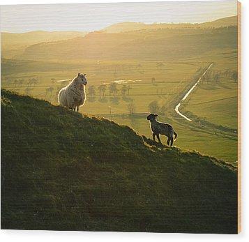 Scottish Sheep And Lamb Wood Print by Mr Doomits