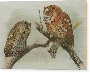 Screech Owls Wood Print by Louis Agassiz Fuertes