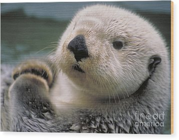 Sea Otter Wood Print by Art Wolfe