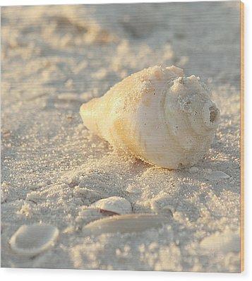 Sea Shells Wood Print by Kim Hojnacki