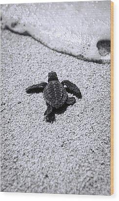 Sea Turtle Wood Print by Sebastian Musial