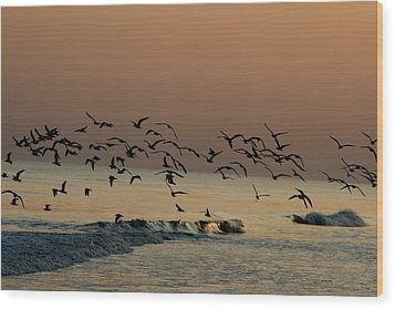 Seagulls Feeding At Dusk Wood Print by Beth Andersen