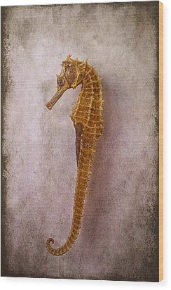 Seahorse Still Life Wood Print by Garry Gay