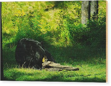 Searching For That Last Termite Wood Print by Jeff Swan