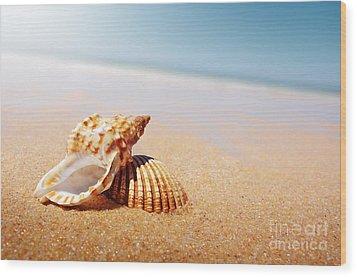 Seashell And Conch Wood Print by Carlos Caetano