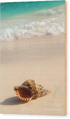 Seashell And Ocean Wave Wood Print by Elena Elisseeva