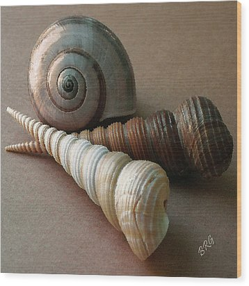 Seashells Spectacular No 29  Wood Print by Ben and Raisa Gertsberg