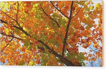 Season Of Change Wood Print by Scott Cameron