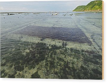 Seaweed Farming, Bali Wood Print by Science Photo Library