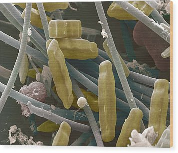 Sem Of Diatoms And Blue-green Algae Wood Print by Power And Syred
