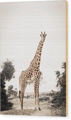 Sentinal Giraffe Wood Print by Mike Gaudaur