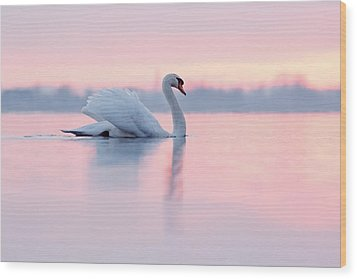 Serenity   Mute Swan At Sunset Wood Print by Roeselien Raimond