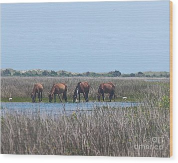 Shackleford Horses And Friends 3 Wood Print by Cathy Lindsey