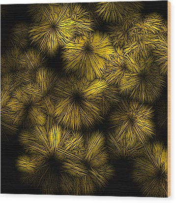 Shattered Daisy 5 Wood Print by Patricia Keith