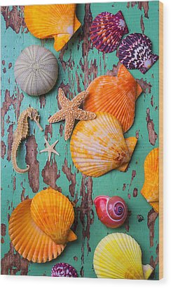 Shells On Old Green Board Wood Print by Garry Gay