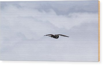 Short Eared Owl Above The Clouds Wood Print by Brad Scott