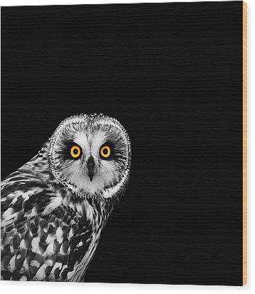 Short-eared Owl Wood Print by Mark Rogan