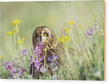 Short-eared Owl Wood Print by Thomas and Pat Leeson