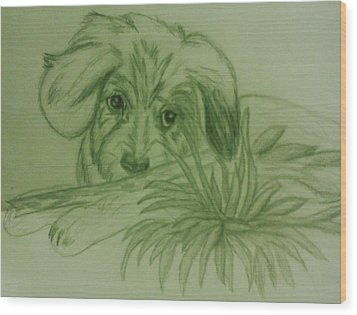 Shy Puppy Wood Print by Christy Saunders Church