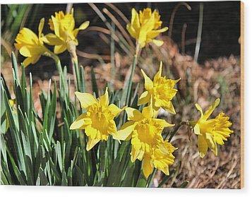 Sign Of Spring Wood Print by Carolyn Ricks