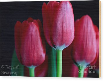 Silky Smooth Tulips Wood Print by Tracy  Hall