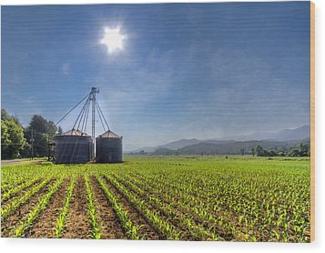 Silos Wood Print by Debra and Dave Vanderlaan