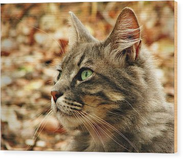 Silver Grey Tabby Cat Wood Print by Michelle Wrighton
